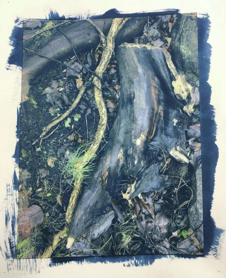 """Western Connecticut State University Adjunct Professor of Art Bruce Dunbar will offer an intensive four-day Alternative Photographic Processes Workshop June 3-6 on the university's Westside campus in Danbury. Pictured is his """"Roots,"""" a cyanotype over ink jet. Photo: Western Connecticut State University / Contributed Photo"""