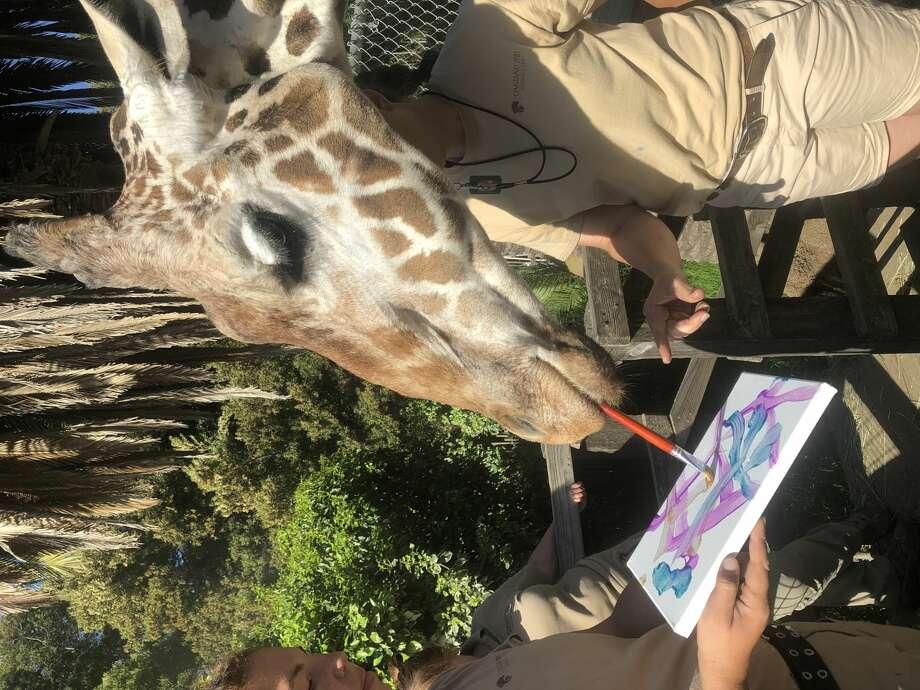 Oakland Zoo giraffe who painted, starred in Nat Geo doc, dies