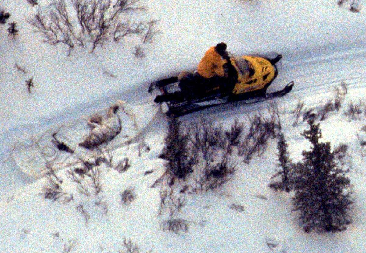 In this photo provided by Dr. Gordon Haber, Healy, Alaska trapper Coke Wallace carries the body of the alpha female wolf of the Toklat (East Fork) wolf family of Denali National Park, Alaska in his sled Friday Feb. 11, 2005 after trapping the radio-collared wolf in both a trap and a snare, seen next to the wolf on the sled, along the north boundary of Denali National Park. (AP Photo/Dr. Gordon Haber)