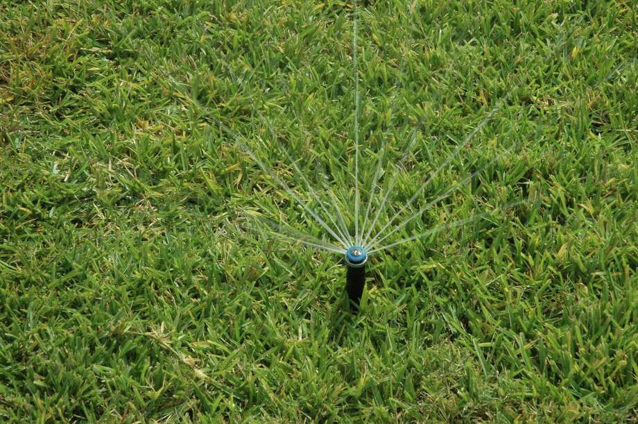 Understanding proper watering techniques for lawns can save water and money. Photo: Kay Ledbetter / Texas A&M AgriLife Research / Texas A&M AgriLife Research