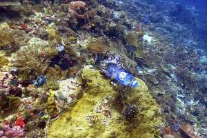 A plastic bottle is wedged in coral on the Great Barrier Reef. A United Nations report says that amphibians, marine mammals and corals are critically endangered from human activity.