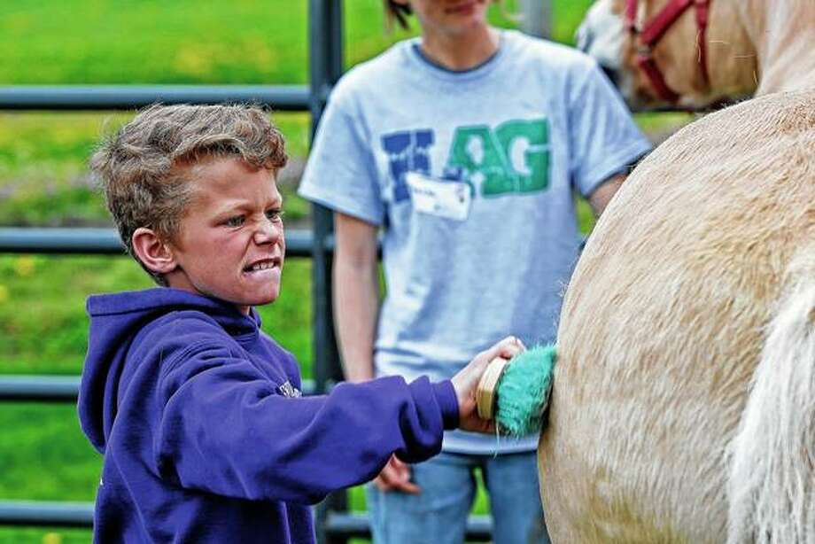 Cajen Austin does his best to groom a horse during Ag Education Day at the Western Illinois Fairgrounds in Griggsville. The Pike-Scott AITC and Griggsville-Perry FFA chapter hosted the event for elementary school students.