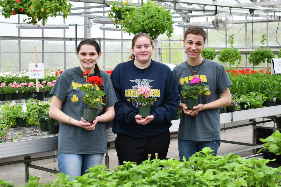 Members of the Northwest Connecticut Conservation District held their annual plant sale, Saturday and Sunday, May 11-12, 2019 at the vocational agricultural center at Northwestern Region 7 High School in Winsted. Shoppers were offered a large assortment of hanging baskets and geraniums, vegetables and bedding plants for containers and gardens. The plant sale, which is a springtime tradition in the northwest corner, ha been held  annually for decades and draws gardeners from around the state. Proceeds support the districts educational program. Photo: Lara Green- Kazlauskas/ Hearst Media