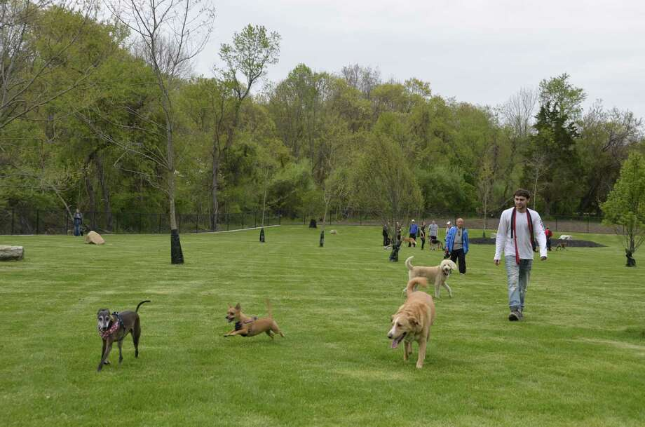 Milford residents and their dogs take time to experience the newly expanded dog park at Eisenhower Park in Milford, Conn., on May 10, when city officials held a ribbon cutting to officially re-open the park. Photo: Jill Dion / Hearst Connecticut Media