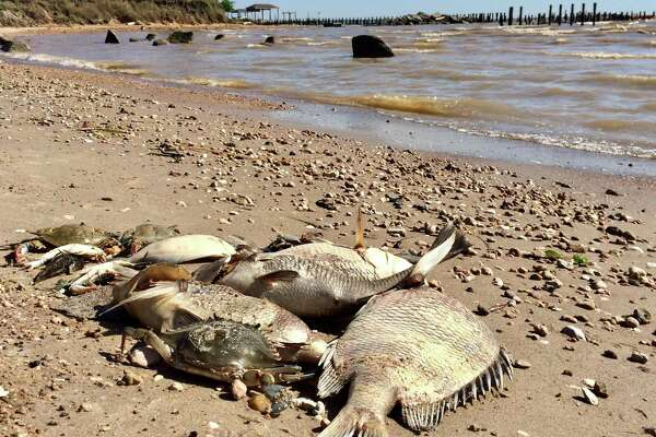 Hundreds of dead fish, crabs seen on Kemah property after