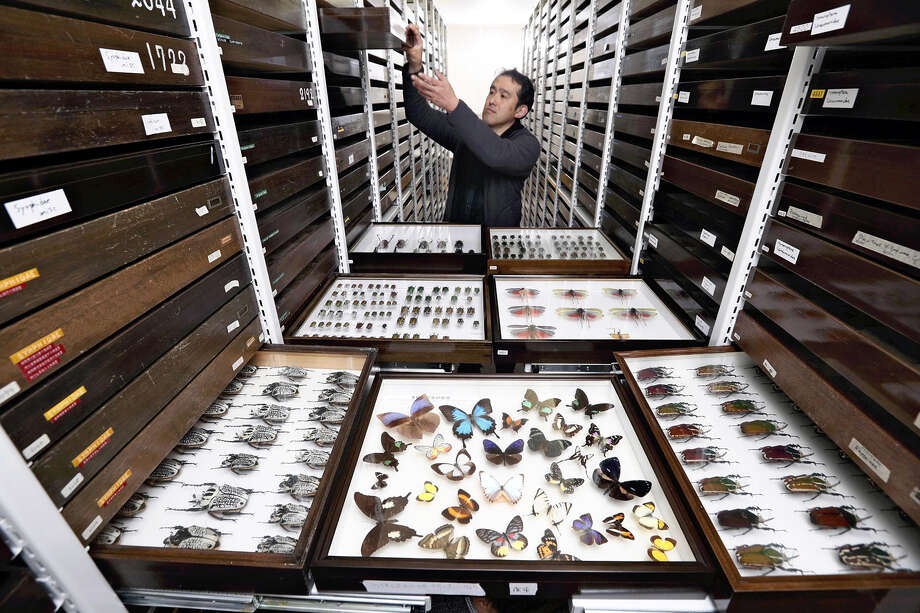 Japan's Ehime University Museum houses more than 1.2 million insect specimens. Photo: Japan News-Yomiuri / Japan News-Yomiuri