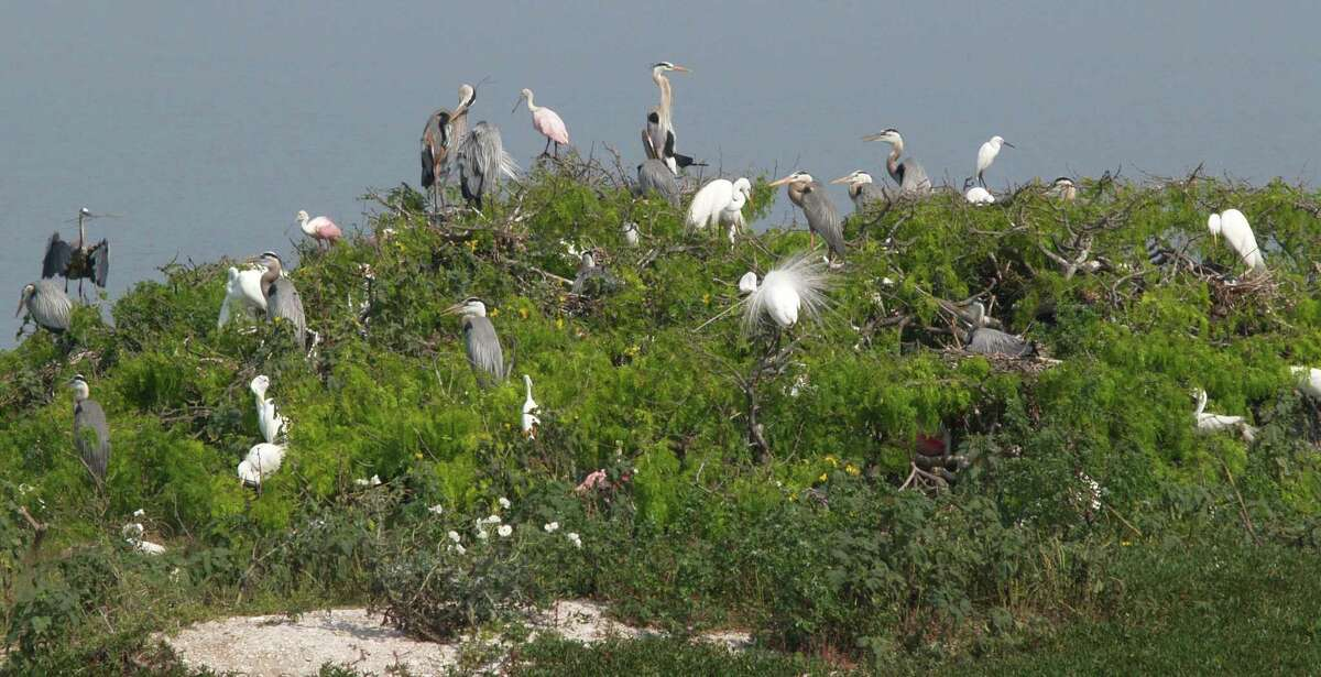 This is only one of the many rookeries seen on one of the outlying islands from a birding trip on the boat The Skimmer.