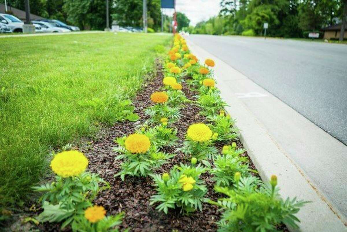 About 1,300 flats of flowers are used to line the two-and-a-half mile stretch along Eastman Avenue in Midland as part of the Midland Blooms annual beautification project. (Photo provided)