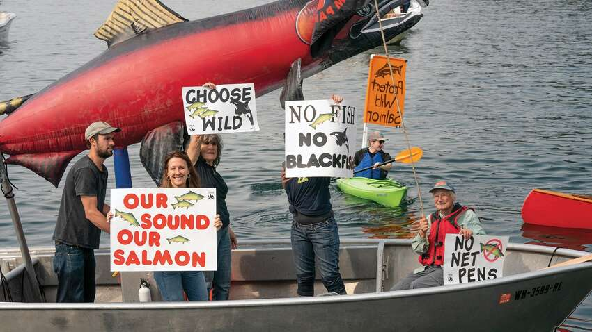 ArtifishalWhat SIFF says: Narratives of ecologists and conservationists are pitted against the human tendency to engineer and control in this probing documentary on the lucrative salmon-hatchery industry.