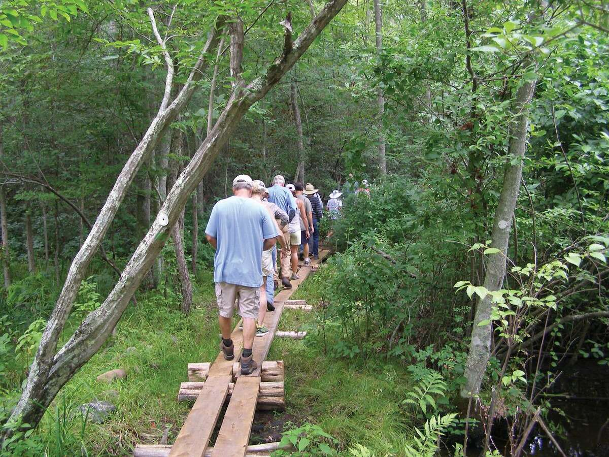 WILDFLOWER WALK: Branford Land Trust's Wildflower Walk at Red Hill Woods will take place Saturday, May 25, at 3 p.m., led by botanist and longtime BLT member Lauren Brown. Walkers will wander along the Red Hill Woods trail and across the 1200-foot bog walk that traverses the 29-acre property with views of the sedge-red maple floodplain and adjacent streams.