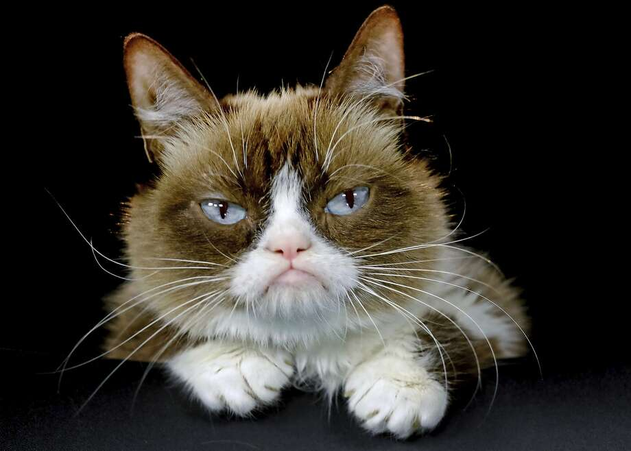 Grumpy Cat beams in 2015. The sourpuss became an internet sensation and was named the Meme of the Year at the 2013 Webby Awards. Her owners say she really wasn't grumpy. Photo: Richard Vogel / Associated Press 2015