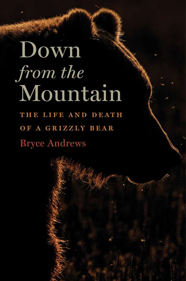 Down from the Mountain: The Life and Death of a Grizzly Bear Photo: Houghton Mifflin Harcourt, Handout / Handout