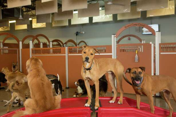 Camp Bow Wow offers day care, boarding, training and grooming for dogs. Camp Bow Wow franchise owner Julia Ambler is an advocate for pet adoption.