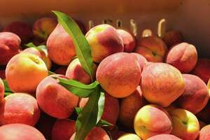 Peaches harvested from an orchard in Fort Valley, Georgia. This is the same location where The Peach Truck sources its peaches.