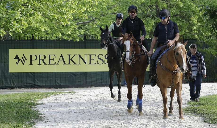 Improbable is led back the barn during training for Saturday's Preakness horse race at Pimlico race track in Baltimore, Friday, May 17, 2019. (AP Photo/Steve Helber) Photo: Steve Helber / Associated Press
