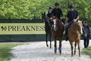 Improbable is led back the barn during training for Saturday's Preakness horse race at Pimlico race track in Baltimore, Friday, May 17, 2019. (AP Photo/Steve Helber)