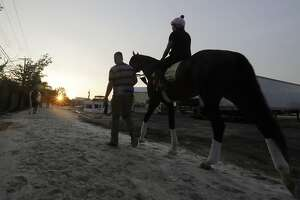 War of Will heads to the track during training for Saturday's Preakness horse race at Pimlico race track in Baltimore, Friday, May 17, 2019. (AP Photo/Steve Helber)