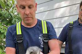 A kitten was rescued from a wall in Easton, Conn., on May 17, 2019.