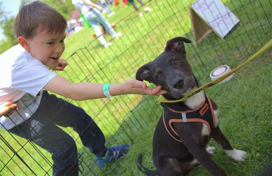 Cooper Ulrich, 7, of Westport, meets Romeo, a four-month-old shepherd mix up for adoption by Chic Clien Chateau, at the Westport Dog Festival at Winslow Park on Sunday. Photo: Jarret Liotta / For Hearst Connecticut Media / Westport News Freelance