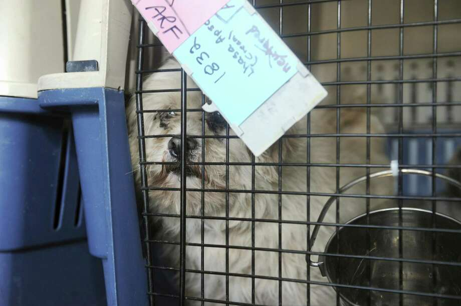 Connecticut is considering a ban on the sale of animals from puppy mills. Photo: File Photo / Greenwich Time