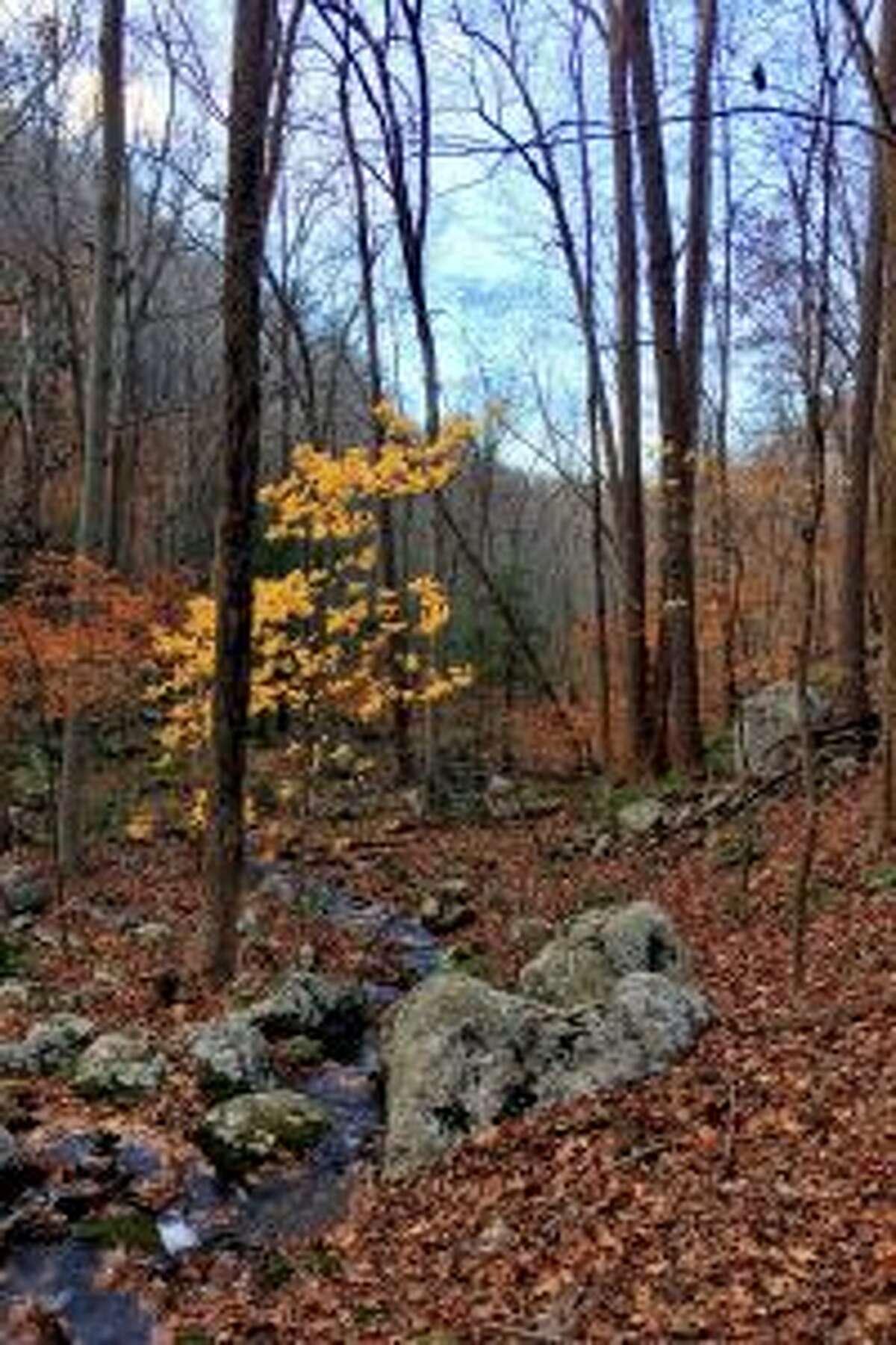 Fall colors in a Hemlock Hills ravine. - Rob McWilliams photo