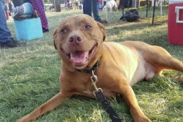Pets Remebered: Samson