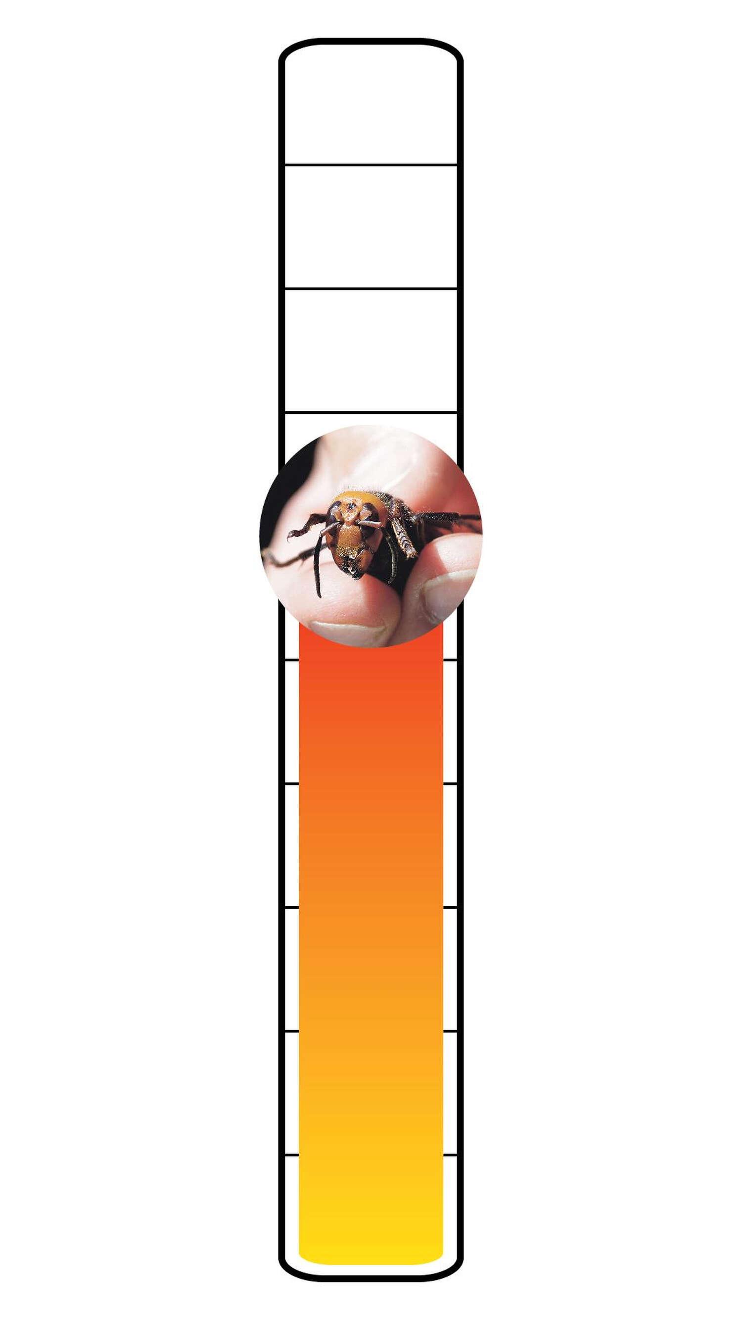 Meter: 6/10. Murder hornet icon.