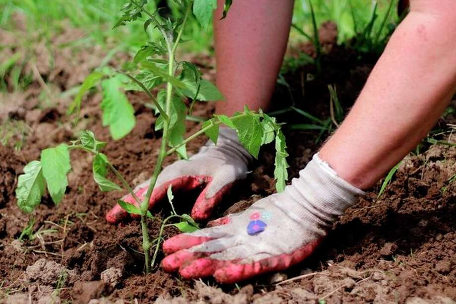 A planting day is scheduled for Wednesday morning at Phoenix Farm in Lee Township.(Photo provided)
