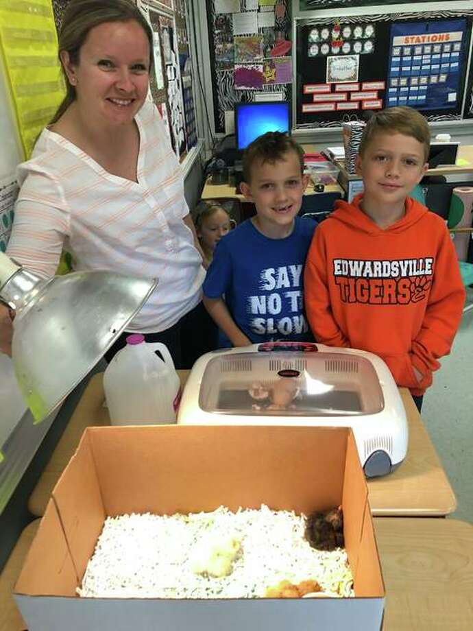Jennifer Gavin, Leclaire Elementary second-grade teacher, and students Jack Whiteaker and Gannon Lynch check on the fifth and final chicken to hatch in the incubator. Gavin brings in chicken eggs to hatch at the end of every school year to provide a learning project and activity to keep the students engaged in learning. Photo: Julia Biggs | The Intelligencer
