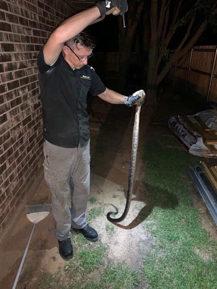 Oklahoma resident Wayne Melvin (pictured here) found a giant snake trying to enter his home through the entrance to his dryer.