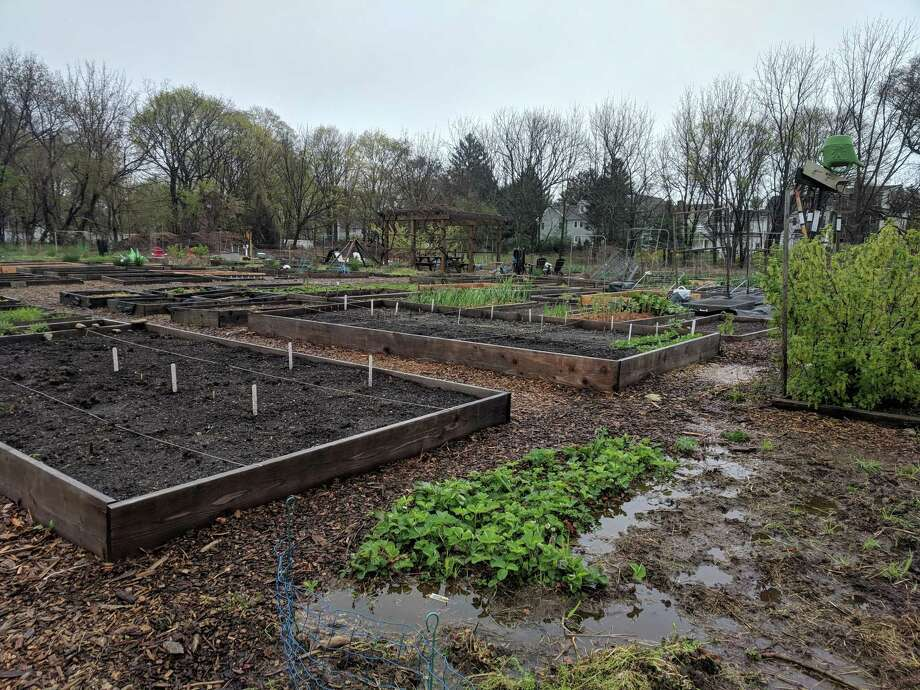 This site was eyed for multifamily housing for low-income residents in a heavily residential single-family section of Westport in the early 2000s. The town purchased the land from the developer, and it is now a community garden. Photo: Jacqueline Rabe Thomas / CTMirror.org