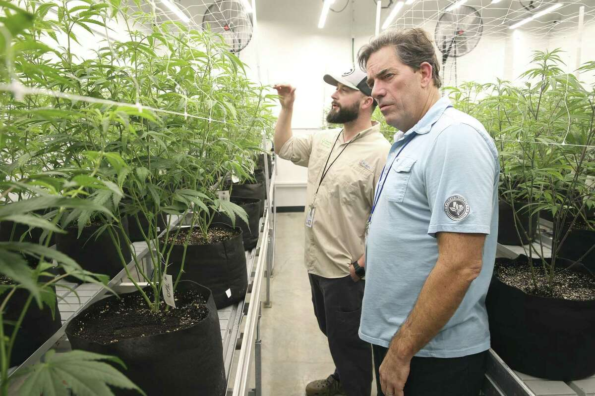 In this Nov. 29, 2018, photo Texas Original Compassionate Cultivation CEO Morris Denton, right, inspects plants in the dispensary's growing room with cultivation technician Robert Russin in Manchaca, Texas. Denton is pushing lawmakers to allow more dispensaries for medical marijuana and to ease restrictions.