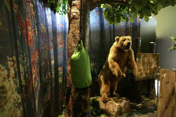 """Survival: The Exhibition"" includes a video interview with a hiker who survived an attack by an enraged bear. The exhibit opens Saturday at the Witte Museum."