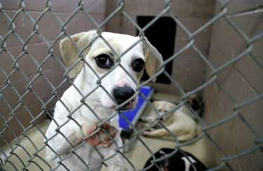 Harris County animal shelter in capacity crisis, drops fees