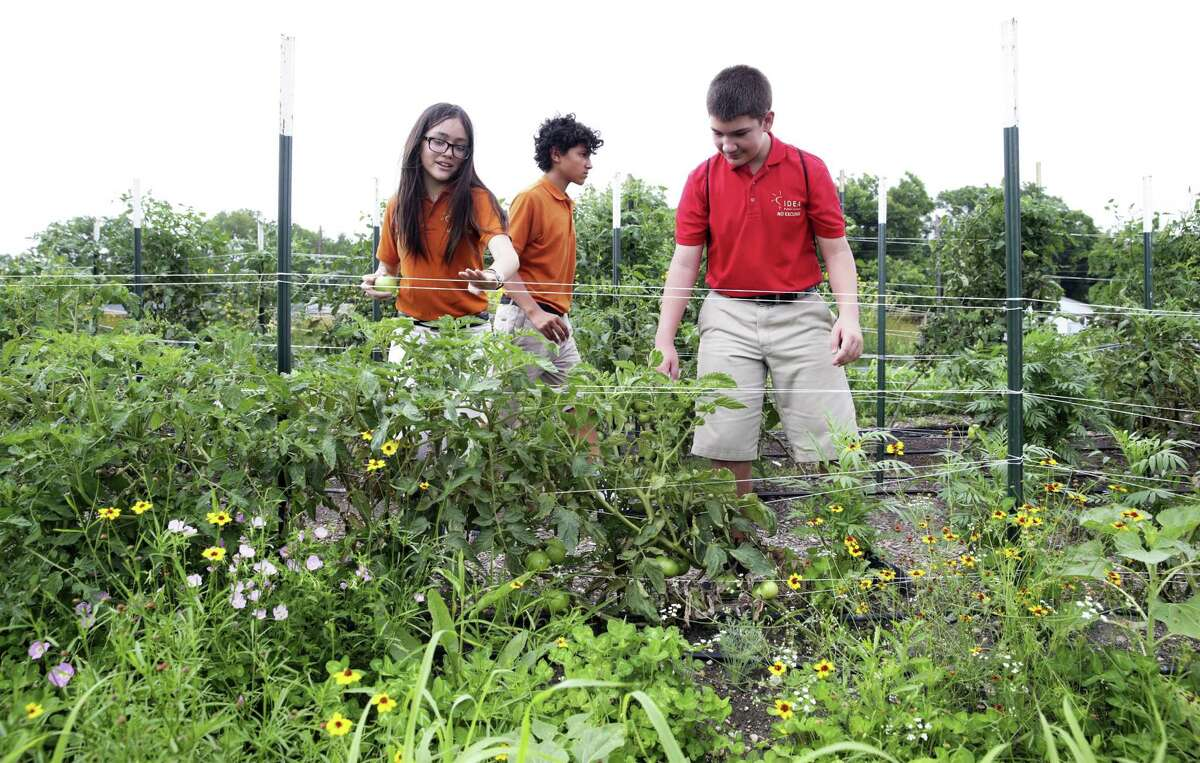 IDEA Monterrey Park students Annabel Aguillon, from left, Ignacio Martinez and Arian Alfonso check out plants in their garden after they are rewarded in a graduation ceremony for completing a course from the Texas A&M Agrilife Extension program on May 22, 2019.