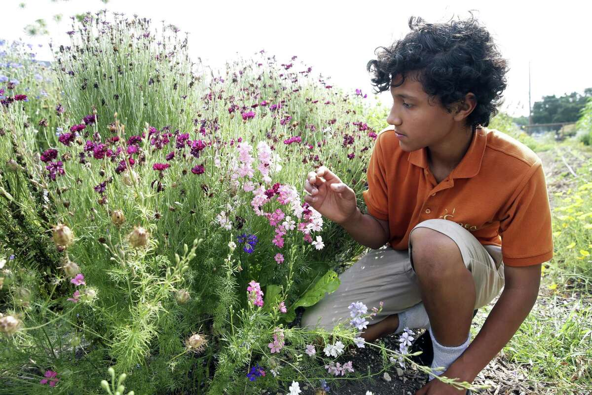 Ignacio Martinez does a close inspection of flowers as students from IDEA Monterrey Park get diplomas after completing a course from the Texas A&M Agrilife Extension program on May 22, 2019.