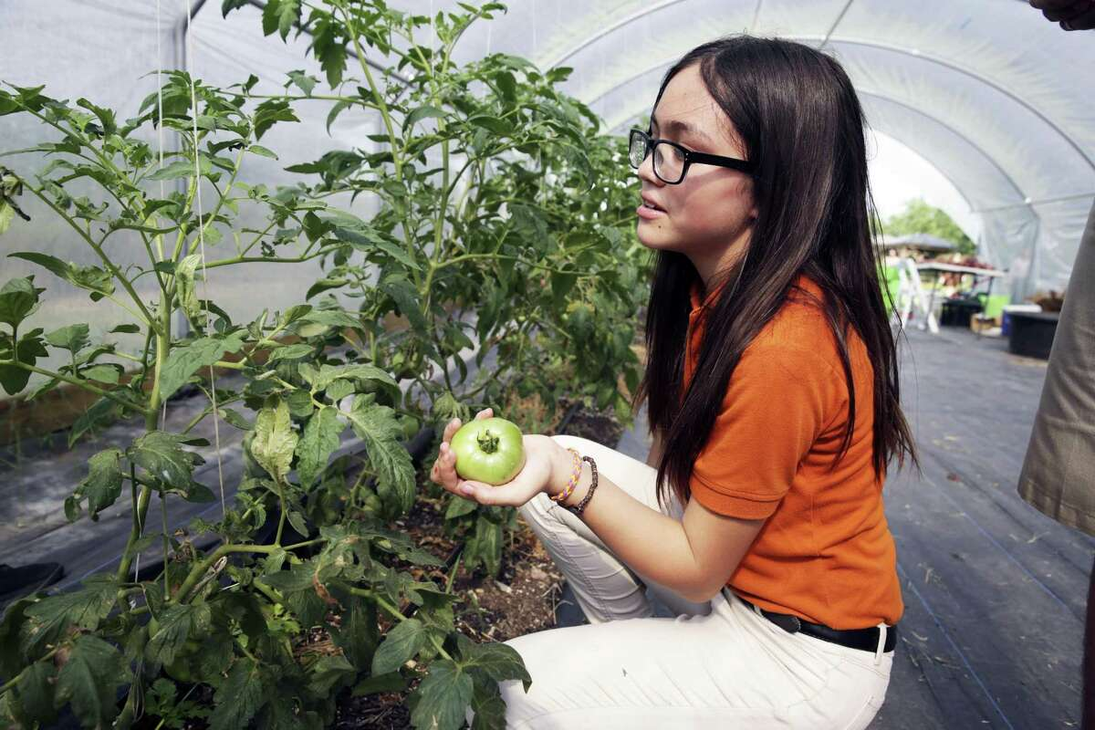 Annabel Aguillon finds a tomato loose from the vine as students from IDEA Monterrey Park get diplomas after completing a course from the Texas A&M Agrilife Extension program on May 22, 2019.