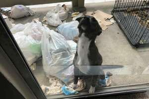 Five severely malnourished and dehydrated dogs were found and rescued from a Houston apartment Wednesday.An active investigation is underway.