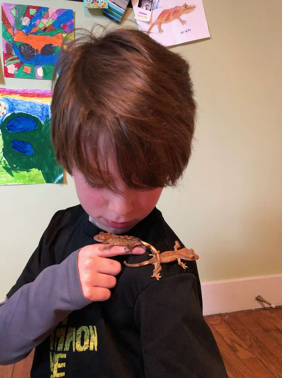 Niko and his two geckos. (Provided)