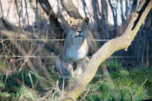Beautiful Adia on the African savanna.