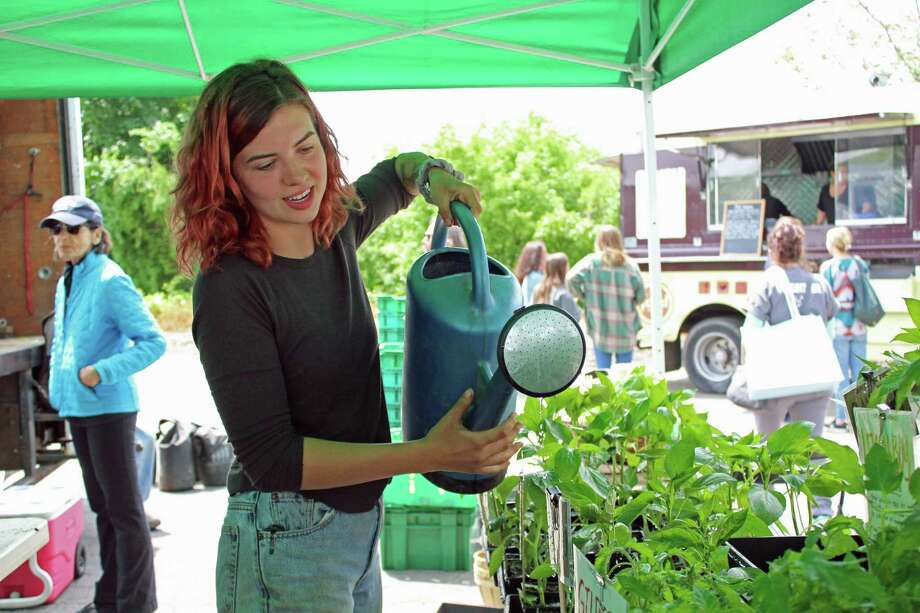 Mady Dean, of Fort Hill Farms, waters potted plants at the opening of the Westport Farmers Market on May 23, 2019. Photo: Melanie Espinal / For Hearst Connecticut Media