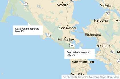 Two more dead gray whales turned up this week near Bay Area beaches