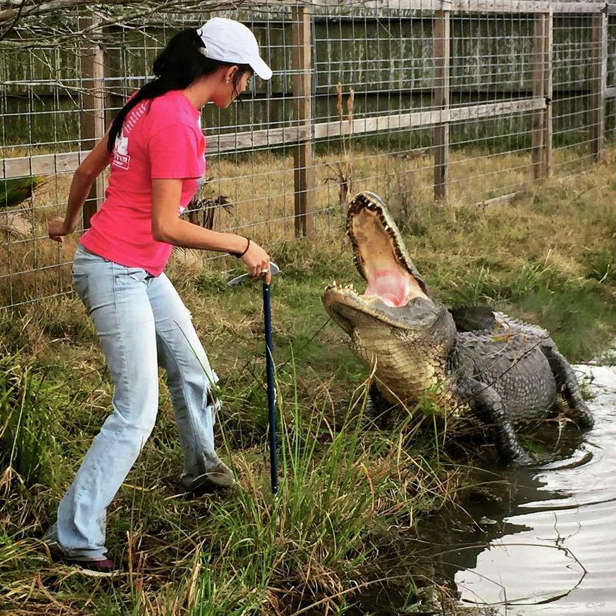 The wildlife tours also consist of feeding sessions, where visitors can watch trained staff feed the alligators and crocodiles in a stunning show that will send chills up your spine.