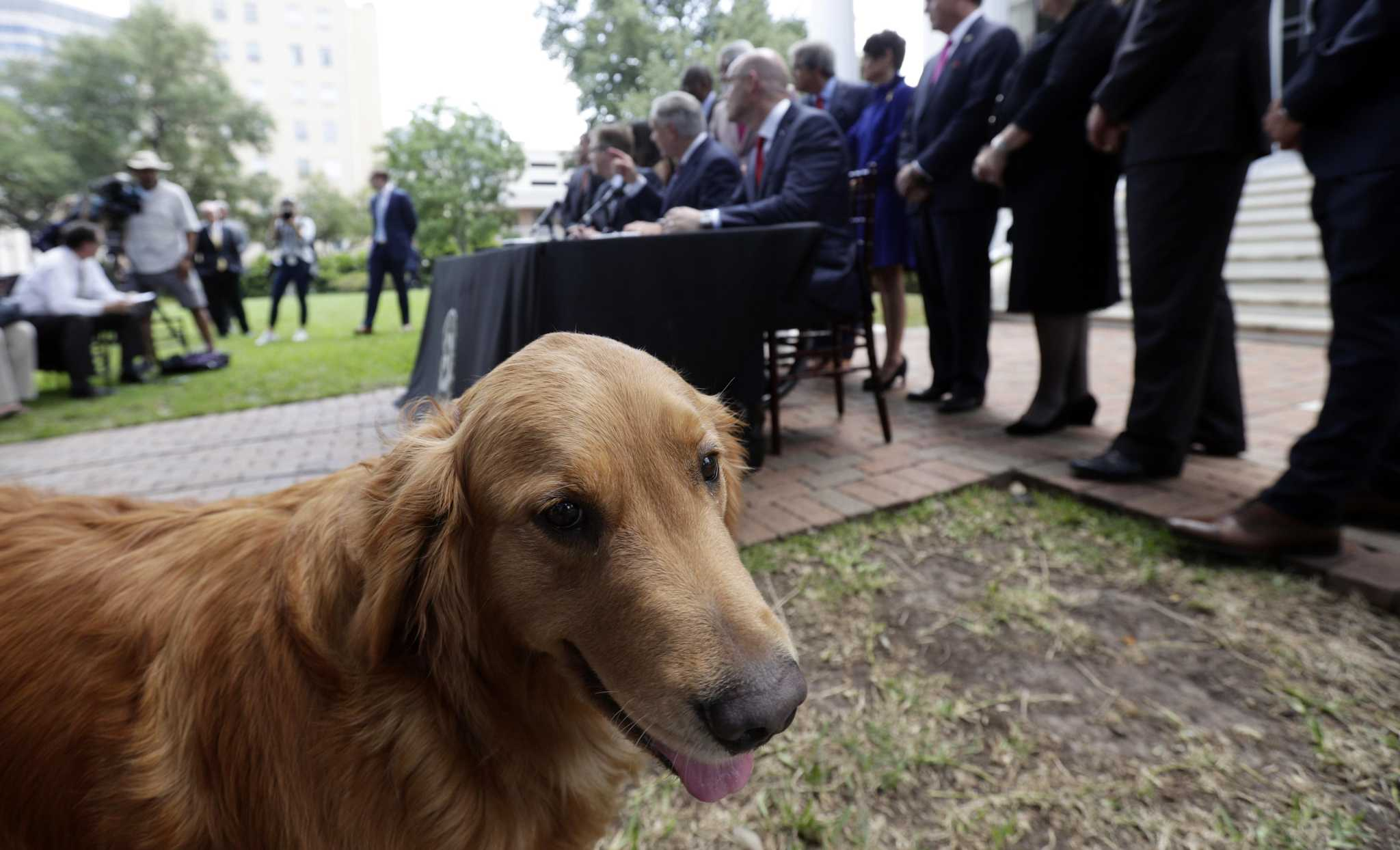 #AbbottHatesDogs trends after governor vetoes animal cruelty bill