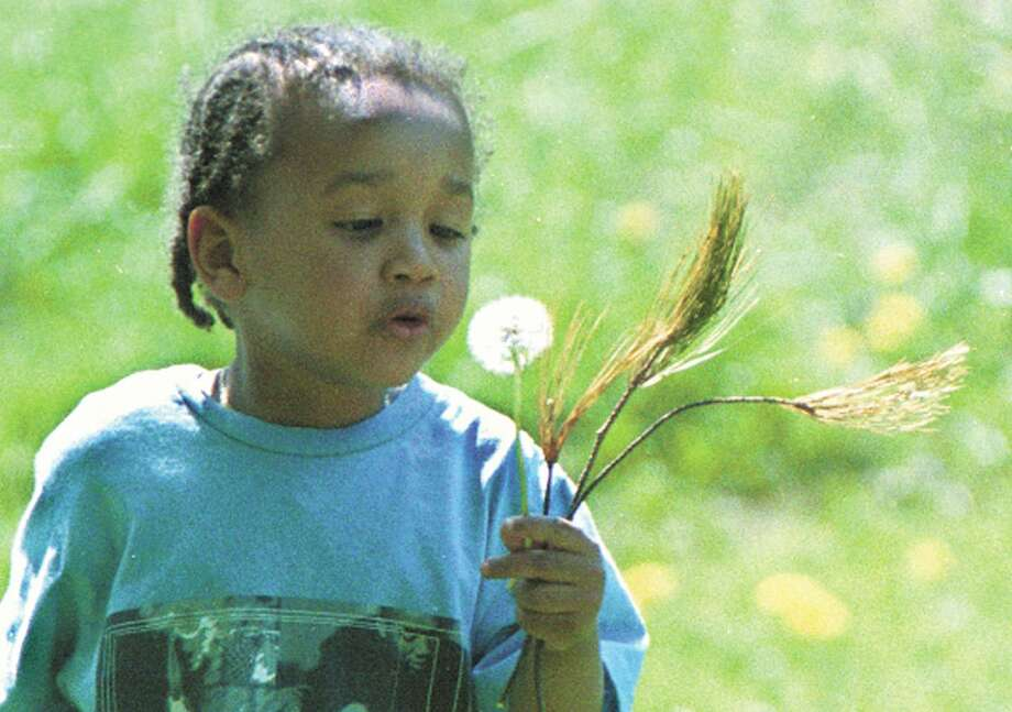 Gianni Taylor, 3, of Middletown, blows on a dandelion at Butternut Hollow Park in Middletown, where he was exploring nature with his aunt on Friday afternoon. Photo: Irena Pastorello /