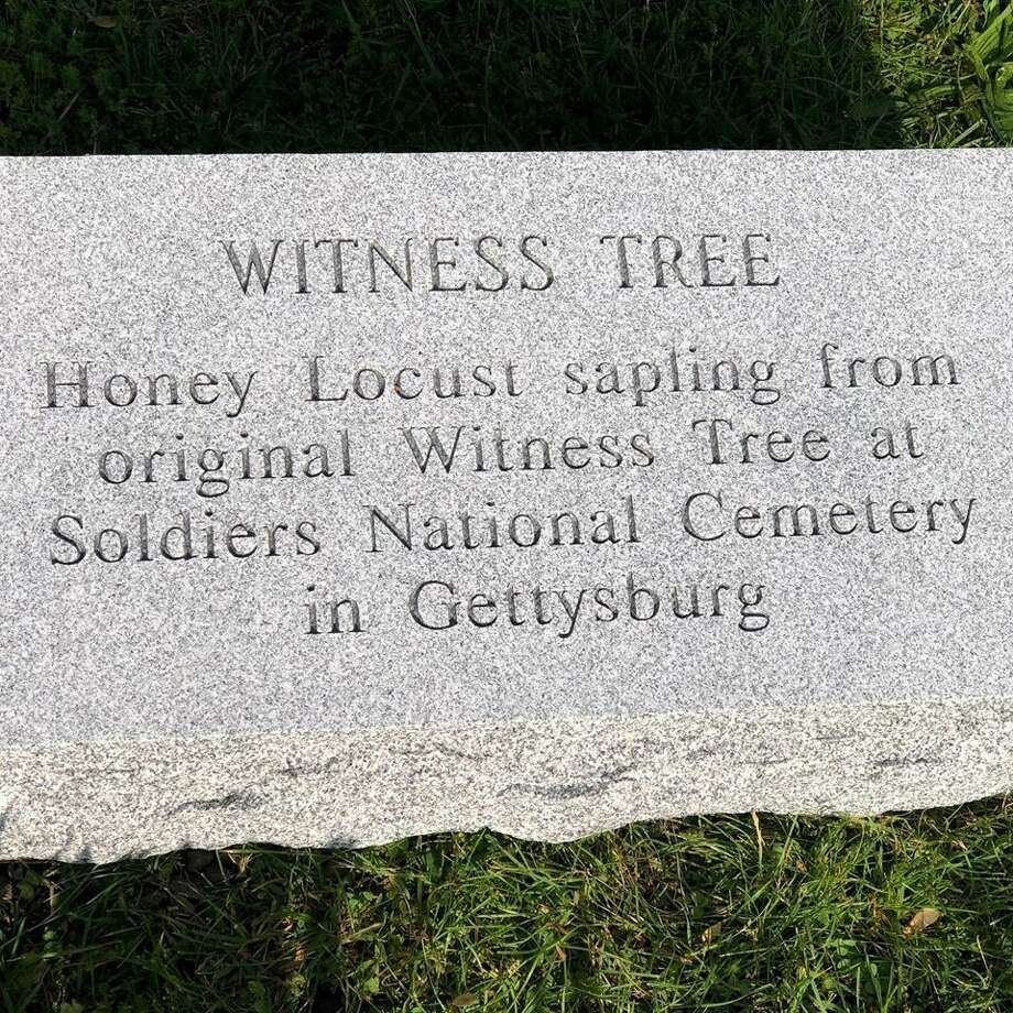 A stone marks the Witness Tree at Spring Grove Cemetery in Darien. Photo: Darien Police Photo