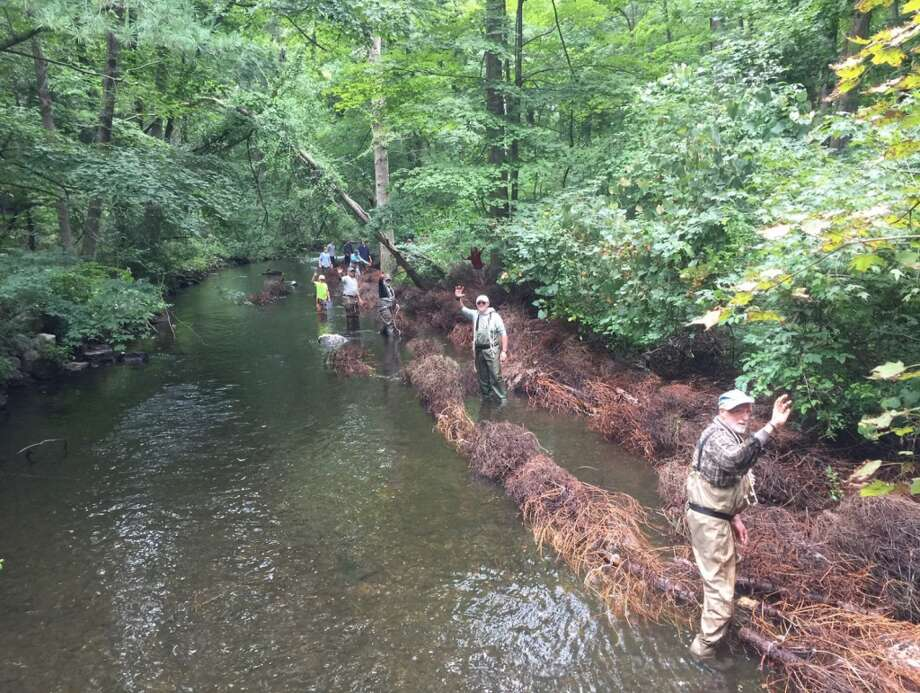 How the Christmas trees are used to create habitats by Trout Unlimited.