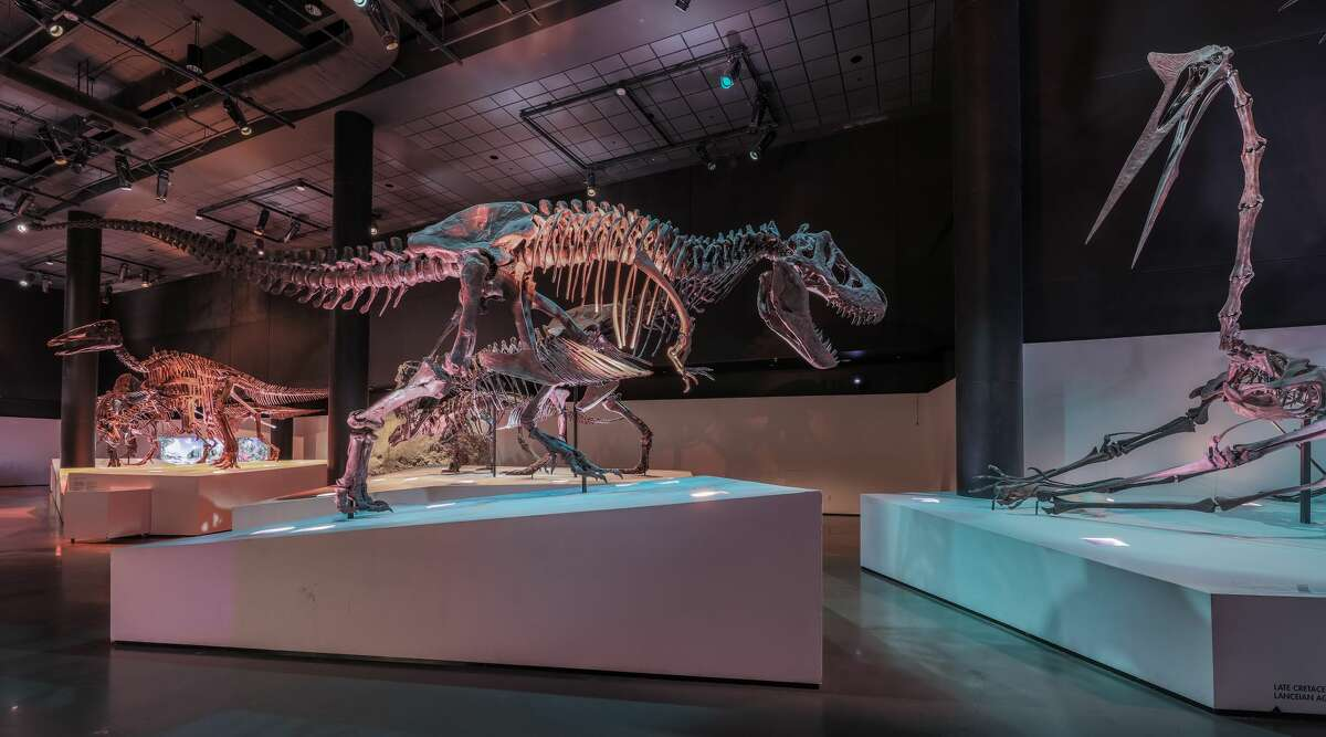 The Houston Museum of Natural Science is hosting an adult sleepover that lets attendees sleep among its exhibits Aug. 3.