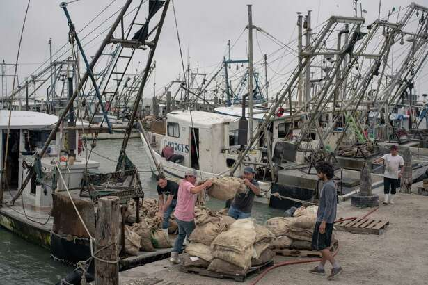 Oyster fishermen with PJ's Shrimp Co. load their day's catch onto pallets in Fulton Harbor, north of Corpus Christi, Texas. Efforts to protect the state's oyster population are taking place up and down the coast.