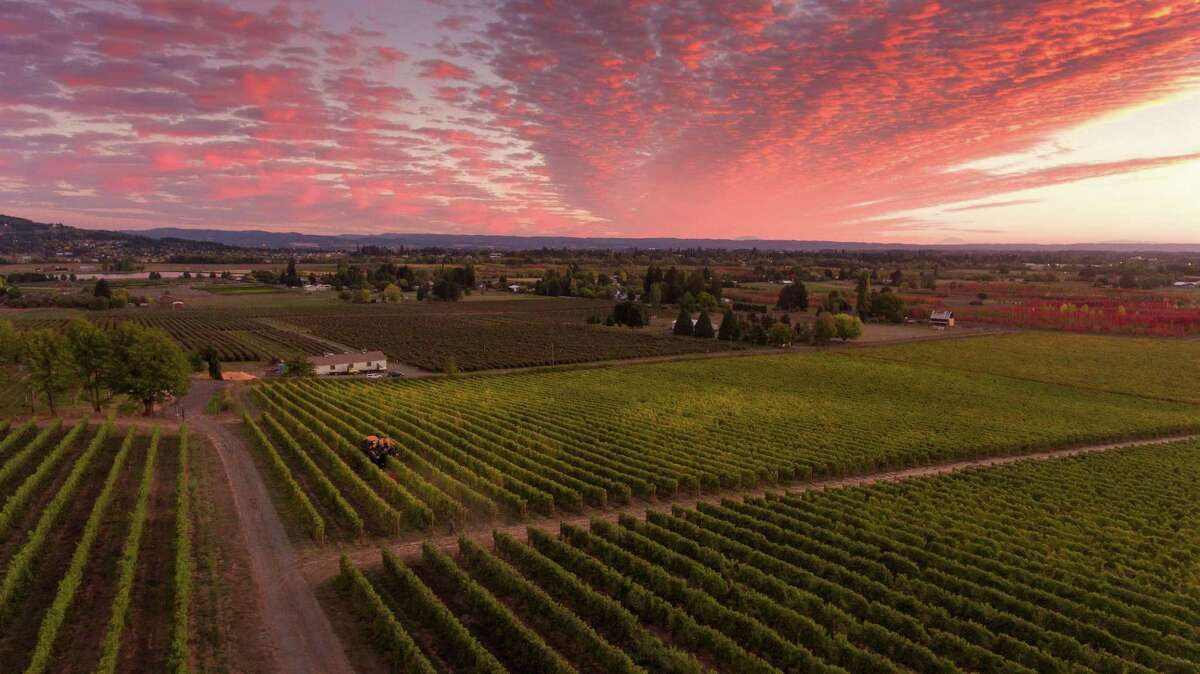 Montinore, located at the north end of Willamette Valley, is the country's largest producer of certified estate wines made from biodynamically grown grapes.